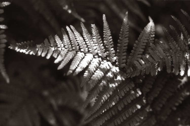 Ferns_3_web